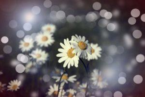 flowers-827014_1280