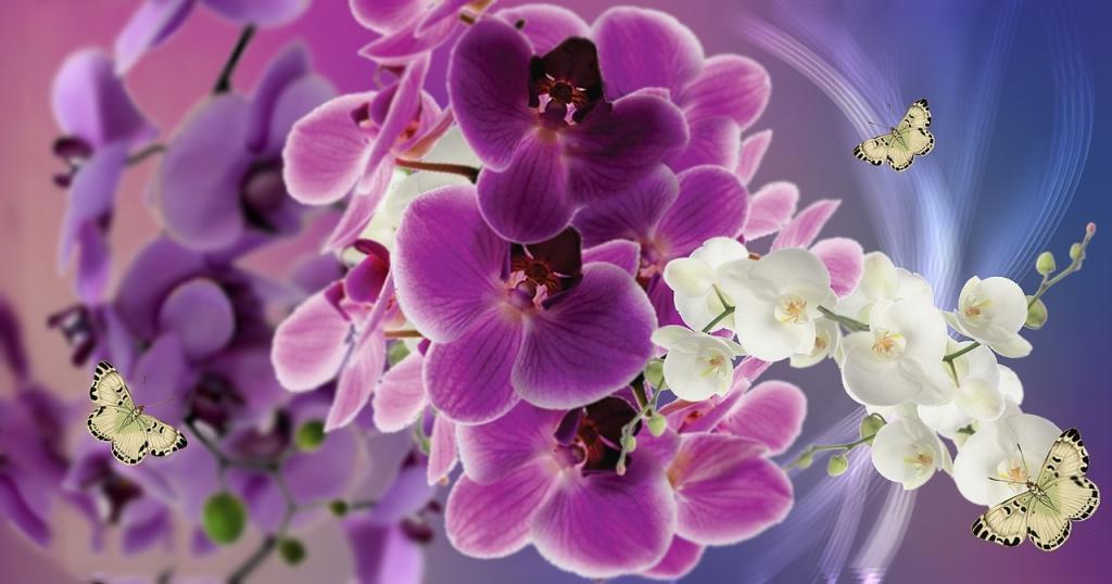 flowers-858887_1280