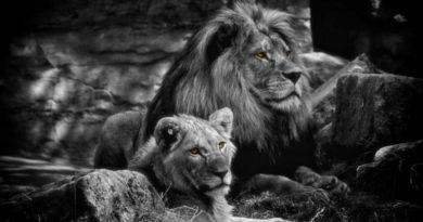 Ohnivé znamení: Lev