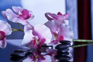 massage-599505_1280