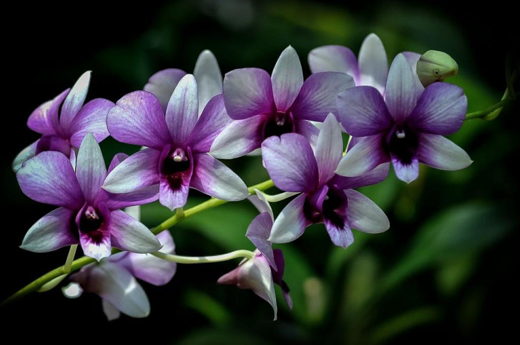 orchid-404360_1280