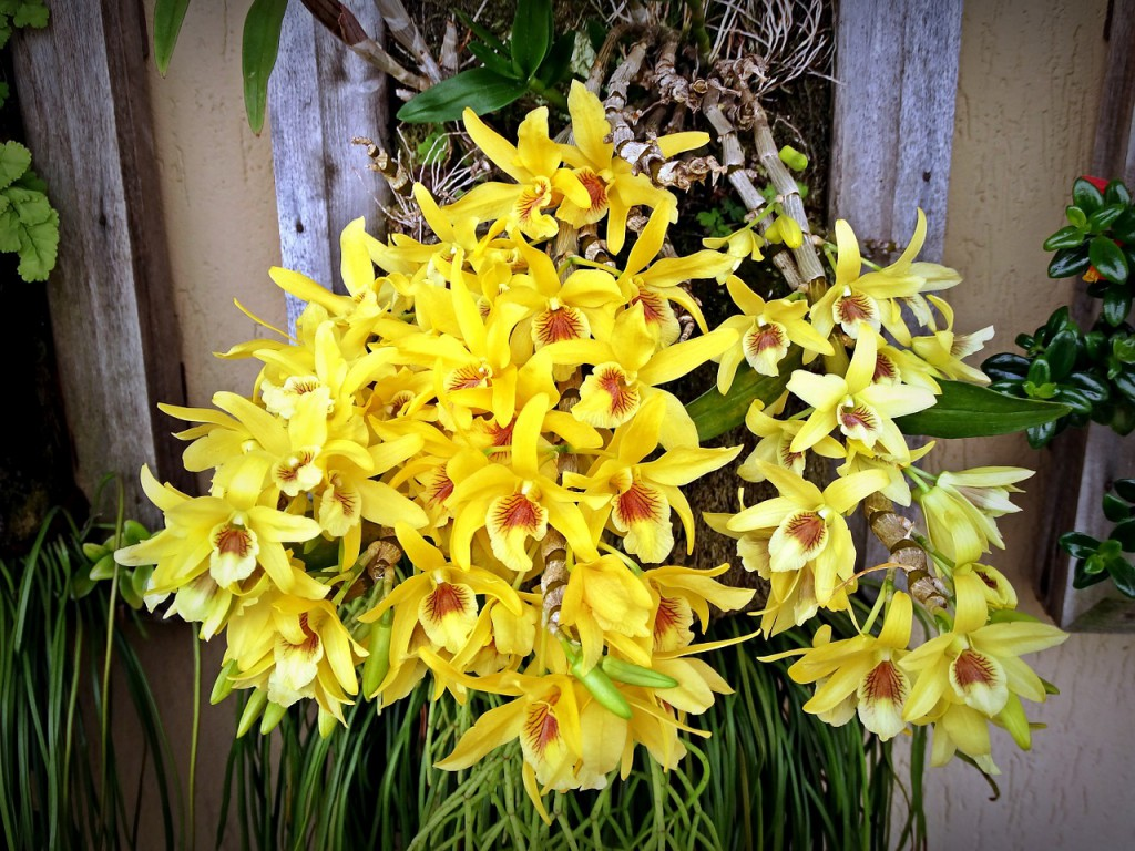 orchid-644297_1280