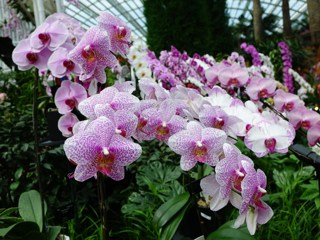 orchids-419416_1280