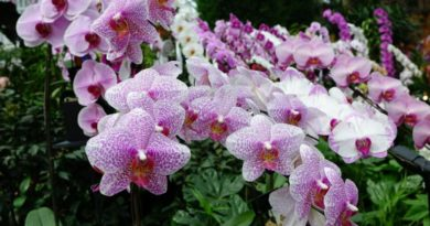 Čarovné orchideje a jejich energie