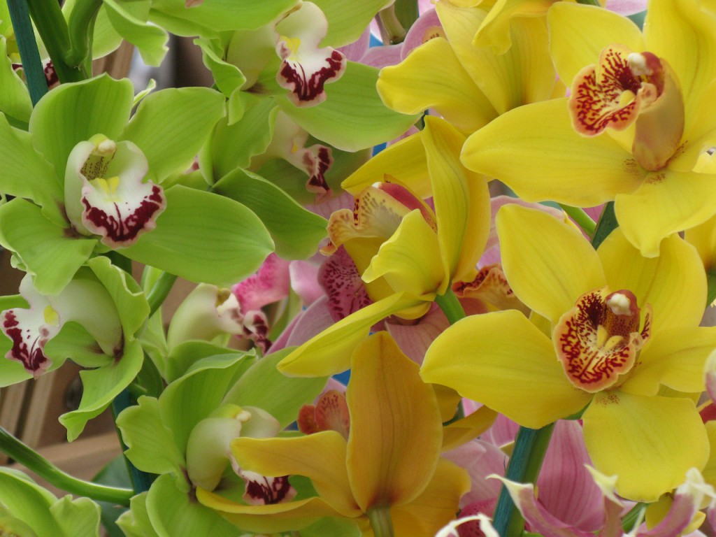 orchids-50200_1280