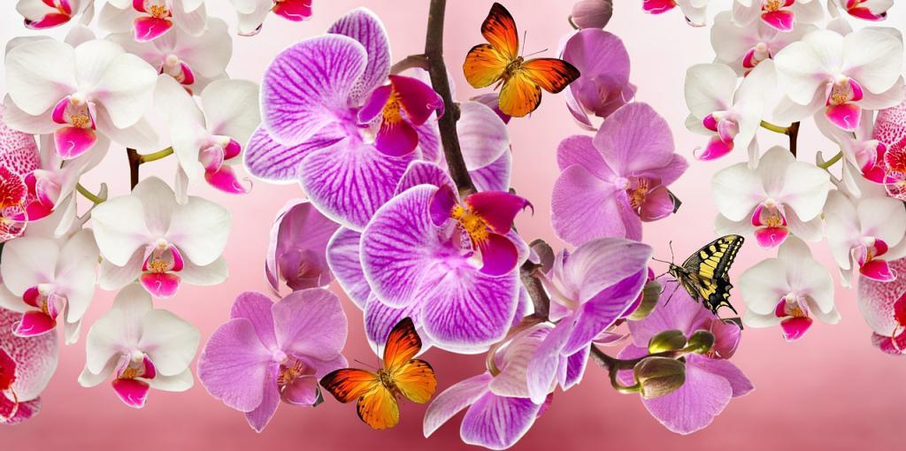 orchids-866609_1280