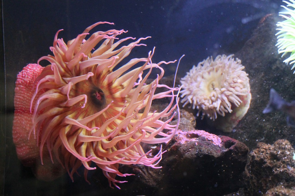 anemone-435143_1280