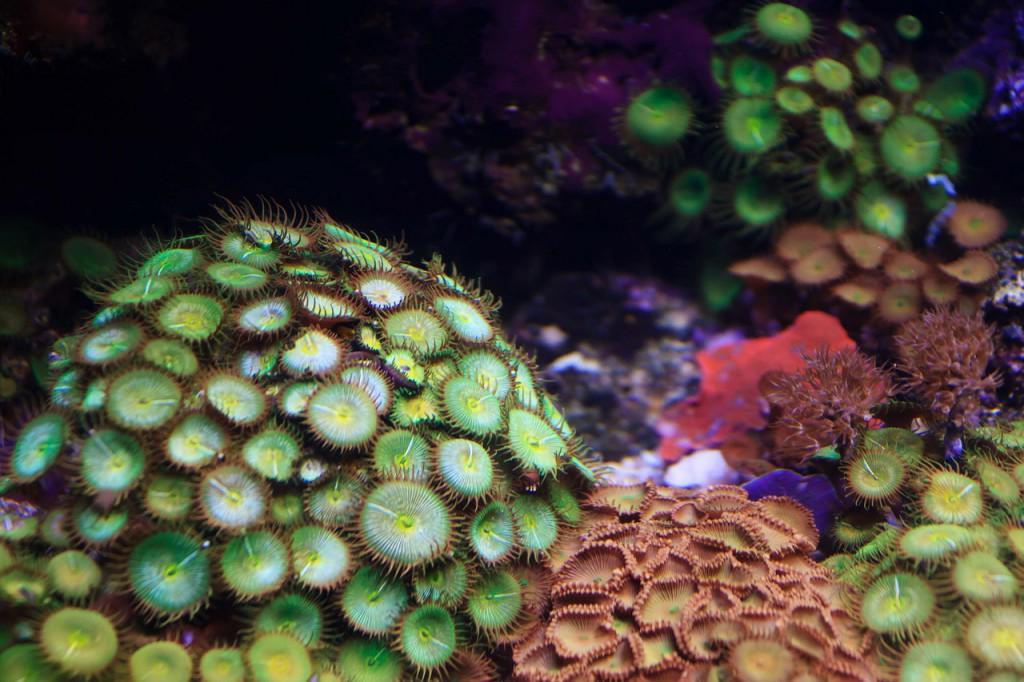 anemone-70351_1280