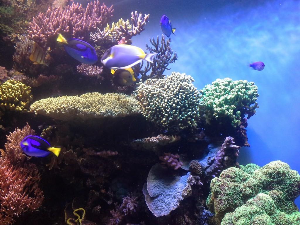 coral-reef-474052_1280