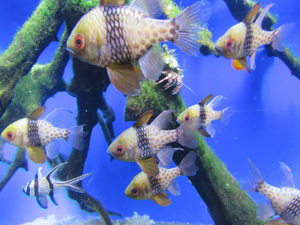 fish-668082_1280