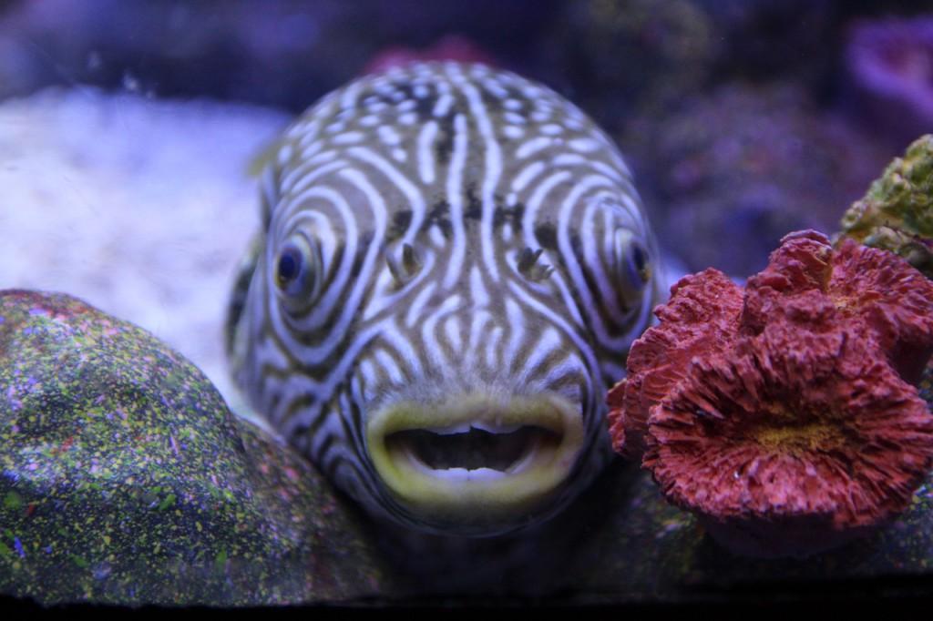 fish-800342_1280
