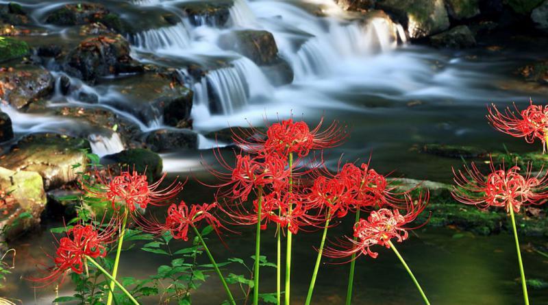 flowers-518722_1280