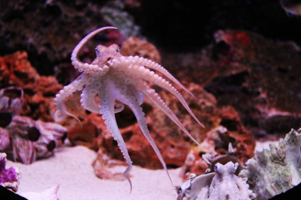 octopus-259740_1280