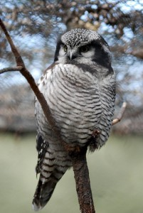 owl-348760_1280