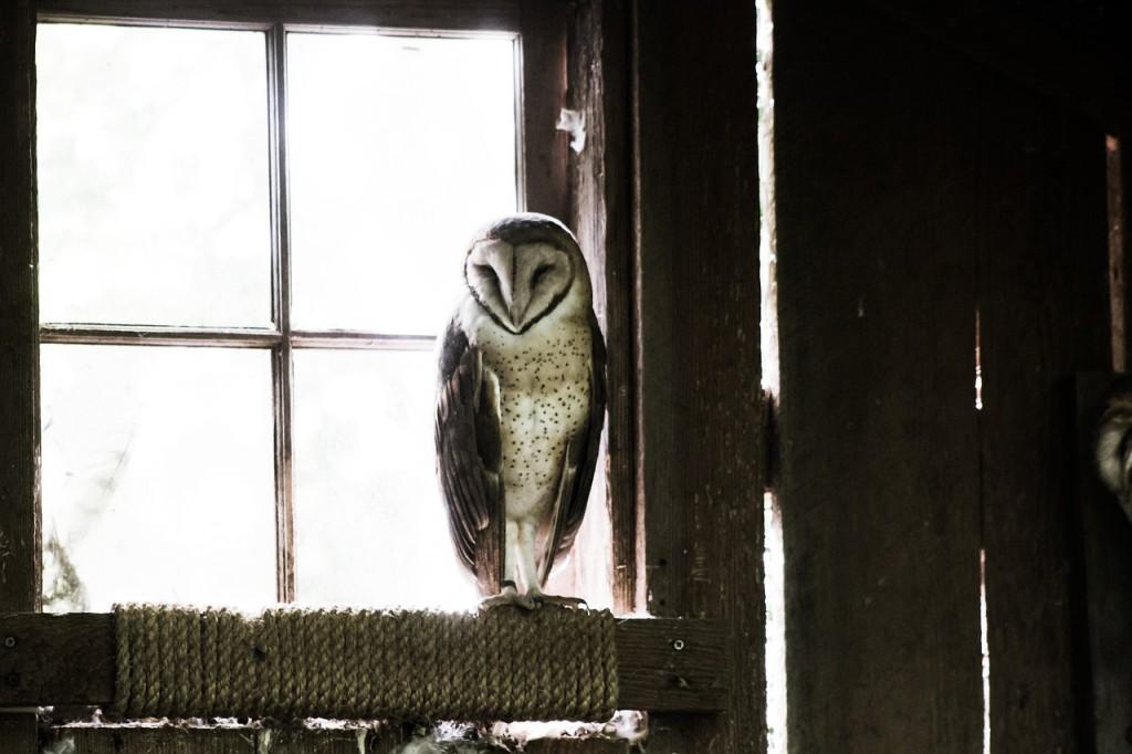 owl-801695_1280