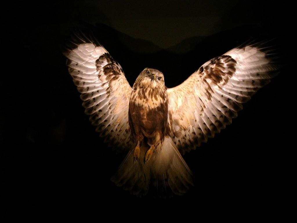 owl-869139_1280