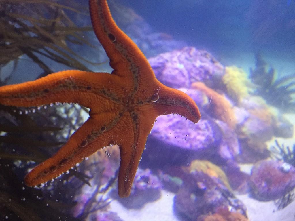 starfish-977442_1280