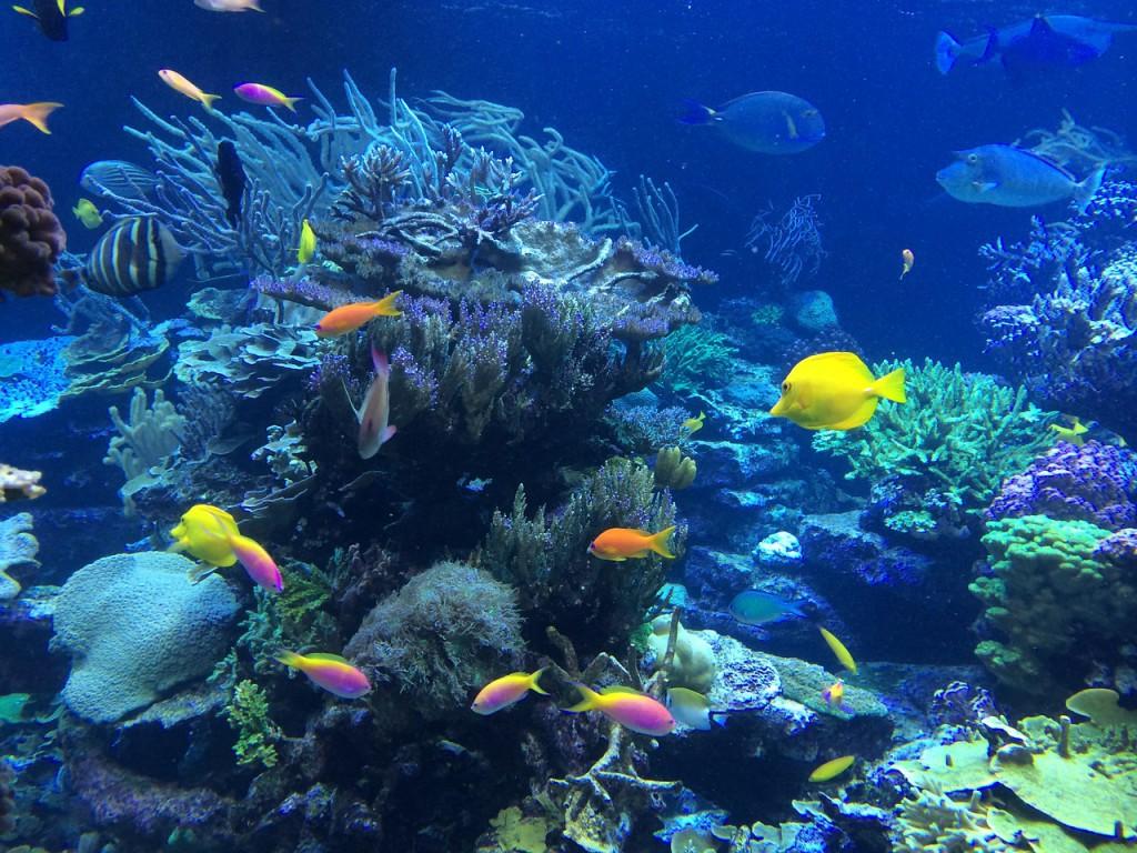 underwater-408904_1280