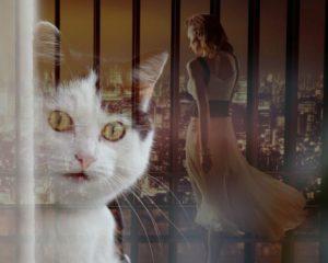 cat-891809_1280