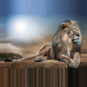 lion-898381_1280