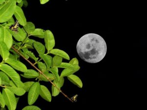 moon-981388_1280