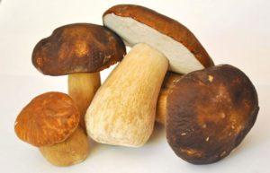 mushroom-913499_1280