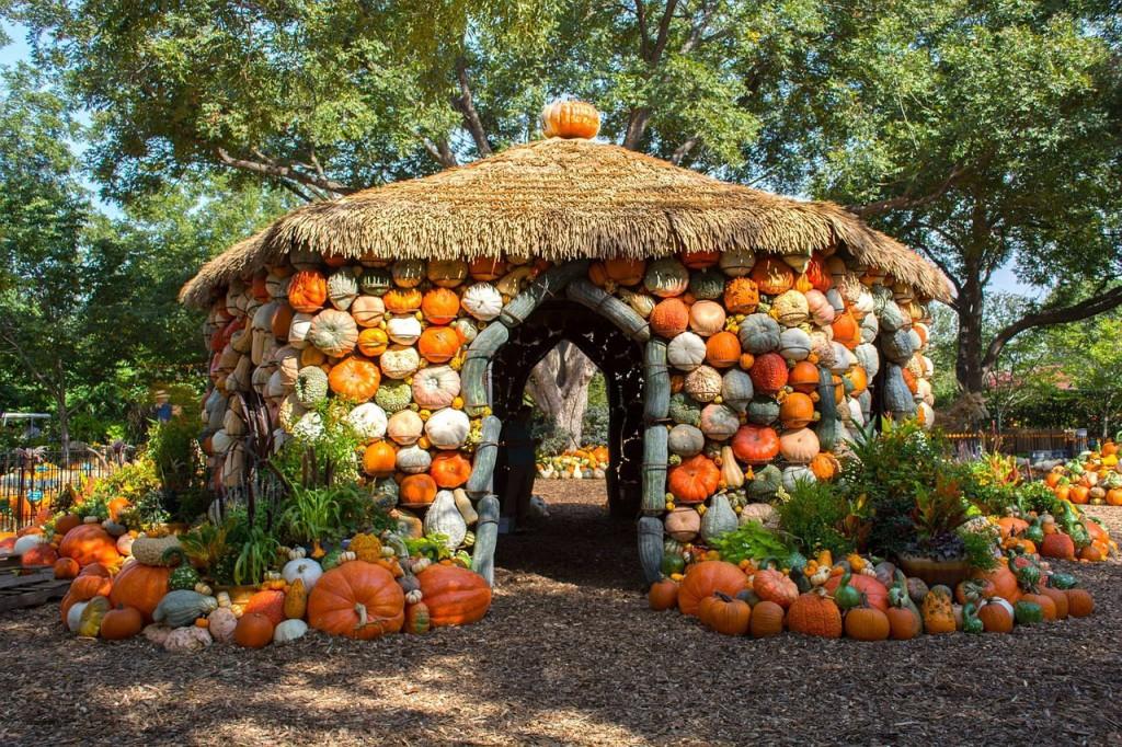 pumpkins-918035_1280