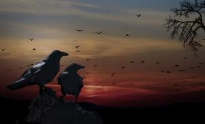crows-559274_1280-300x182