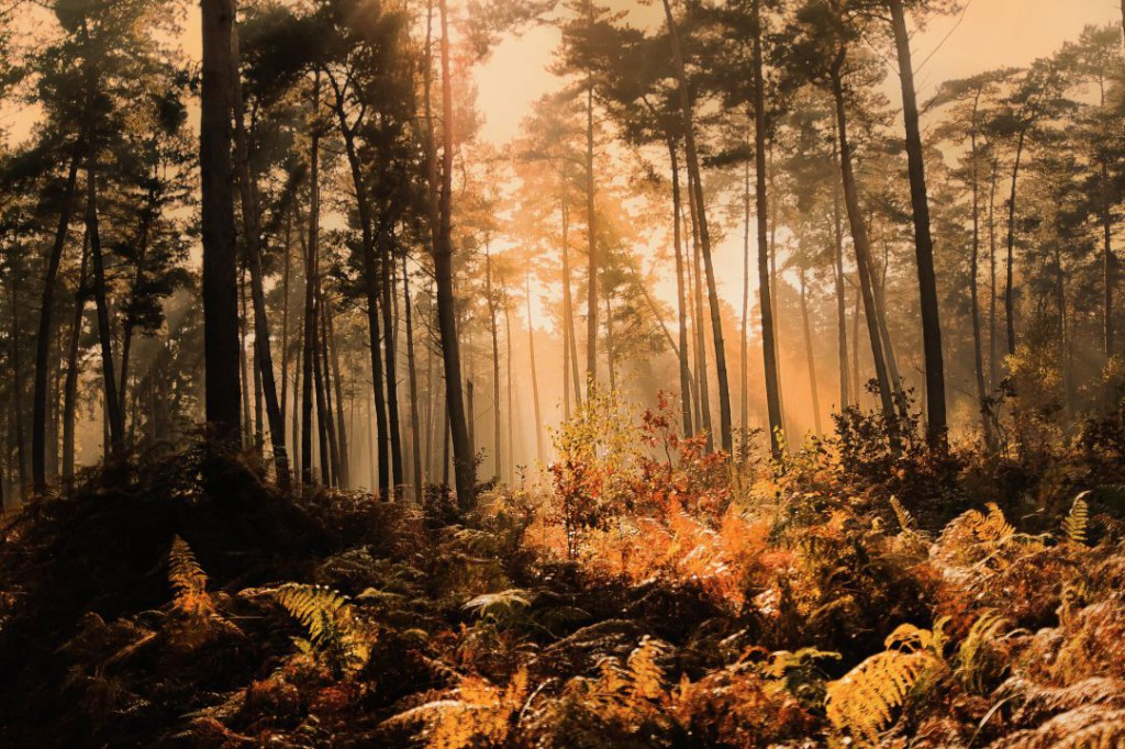 forest-1048287_1920