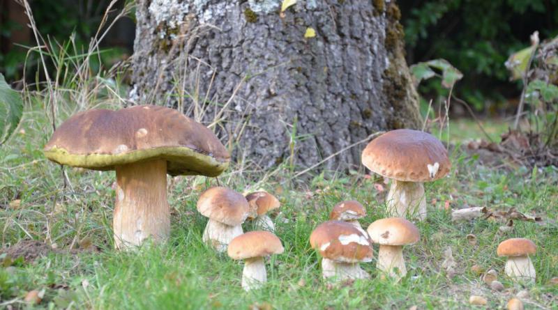 fungus-996739_1920
