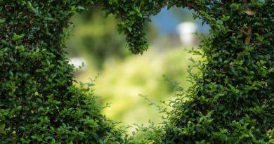 Srdce má vlastní inteligenci