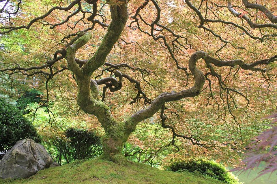 Keltský stromový kalendář