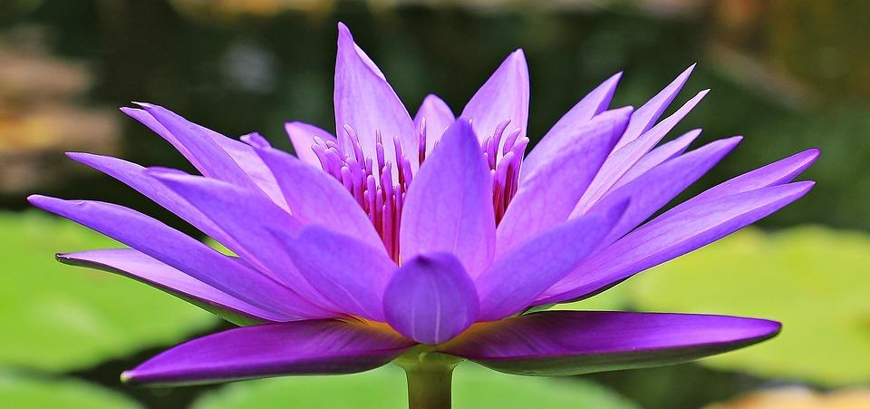 Očistná meditace - jóga
