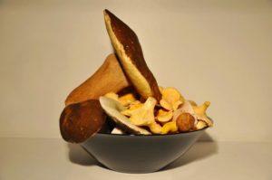mushroom-913497_1280