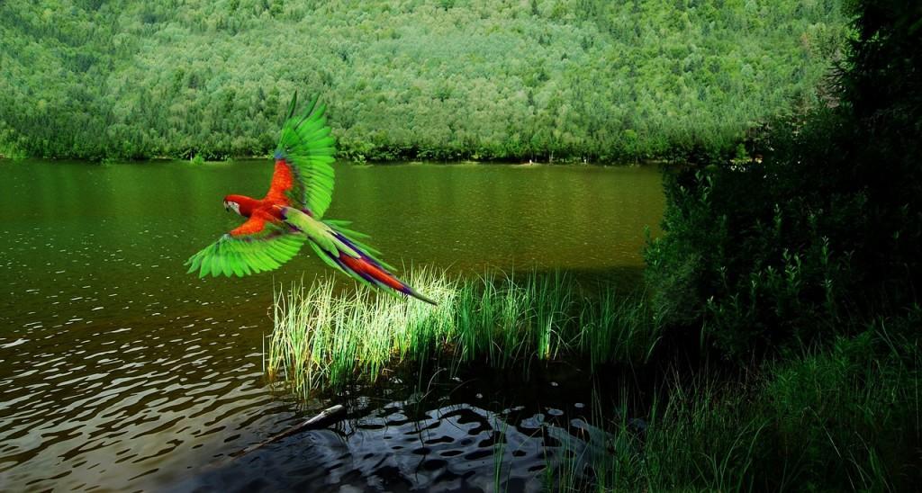 bird-1039064_1280