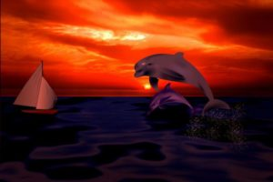 dolphin-1059949_1920