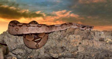 Tajemství ayahuasky a DNA - 2. díl