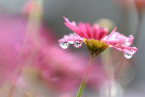 Jarní rovnodennost - radost bohyně Vesny