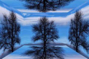 tree-1115847_1920