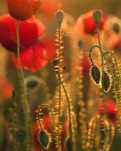 Jaro a světlo - životní elixír