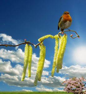 spring-1242686_1920