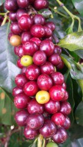 coffee-1009800_1920