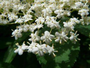 blossom-8120_1920