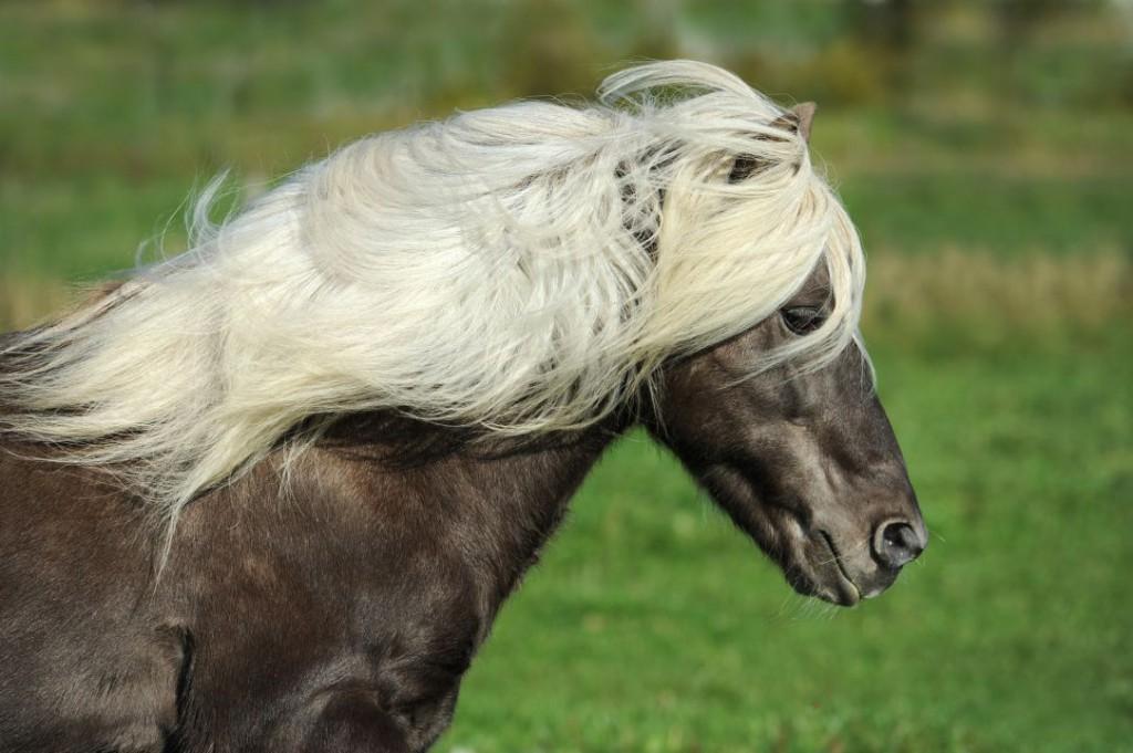 horse-1330704_1920