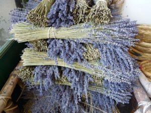 lavender-1253406_1280