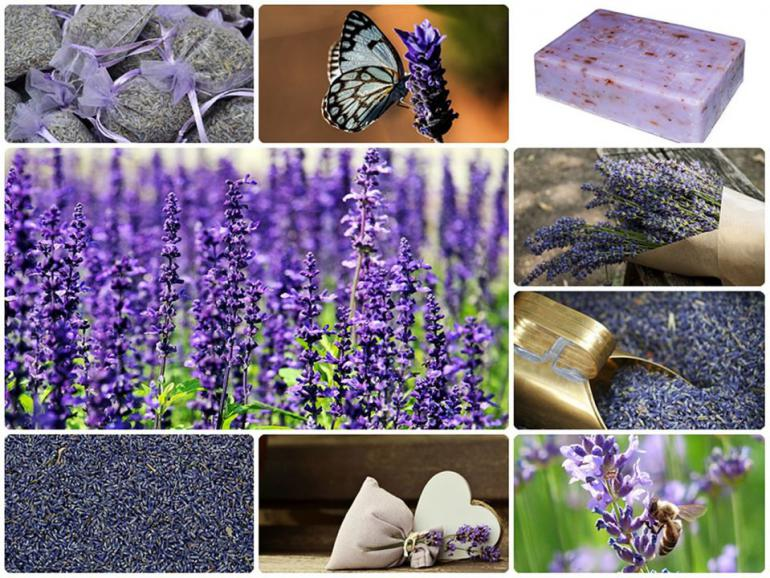 lavender-1532398_1280