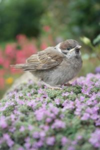bird-392471_1920