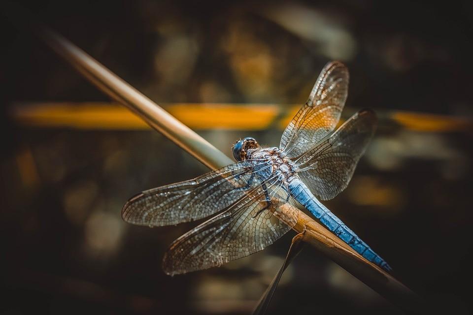 Posmrtné vědomí - Na křídlech vážky