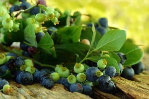 fruit-946499_1920