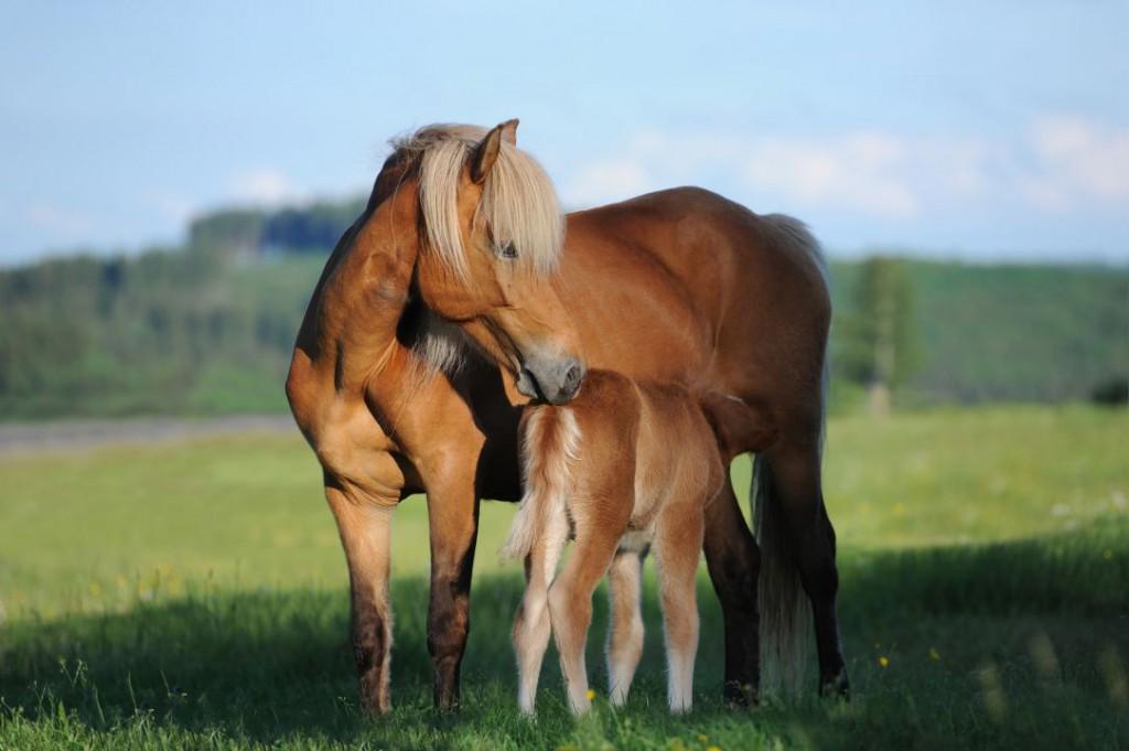 horse-1268801_1920